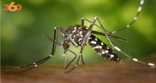 L'infestation des moustiques au Maroc
